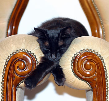 Sleeping between armchairs - Free image #275815