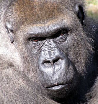 Need I say More? - Kostenloses image #275835