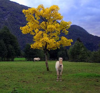 Yellow horse - image #276065 gratis
