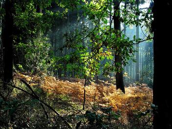 autumn - image #276085 gratis