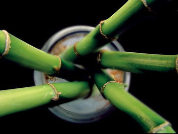 bamboo - Kostenloses image #276105