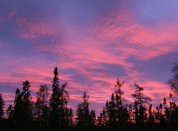 Isn't nature wonderful? - Free image #276335