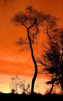 Salmon Sky - image #276775 gratis