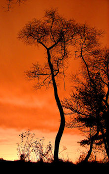 Salmon Sky - бесплатный image #276775