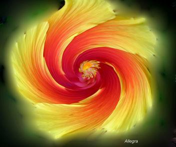 Hibiscus - Kostenloses image #277165