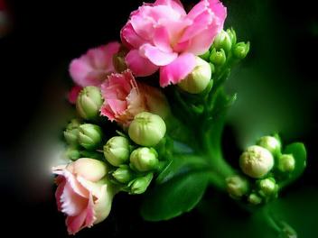 Summer Flower III - Kostenloses image #277205