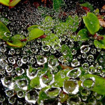 perles de pluie 2 - Free image #277225