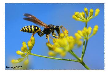 monstres 156 - monstruos - monsters (avispa - vespa - wasp) - Free image #277525