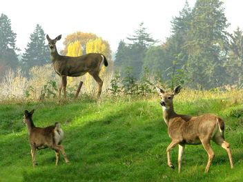 Deer - image #277585 gratis