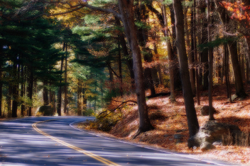 Forest Road - image gratuit #277695