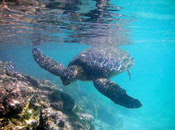 Happy Honu - image gratuit #277755