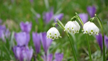 Spring in Botanic Garden Cluj-Napoca - image gratuit #278135