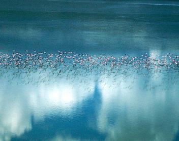 flamingo migration makgadikgadi pan - Free image #278505