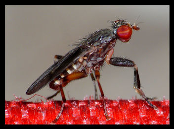 Little Fly - image gratuit #278585
