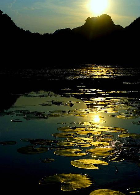 golden lotus lake - image gratuit #278755