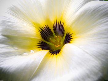 White Flower - image #278805 gratis