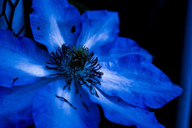 Элемент название которого связано с синим цветом его соединений
