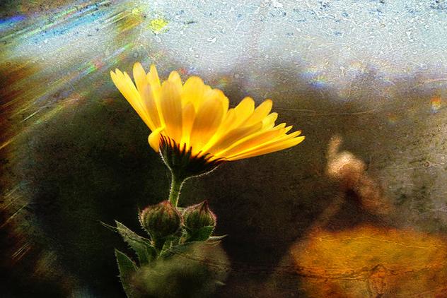 flower symphony - Free image #279145