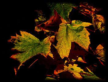 Herbstlaub/Autumn foliage - Kostenloses image #279155