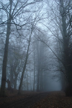 Winter morning - image #279215 gratis
