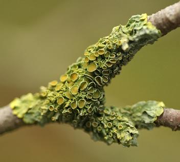 Green Lichen - Free image #279235