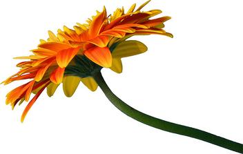 Flower 11 - бесплатный image #279725