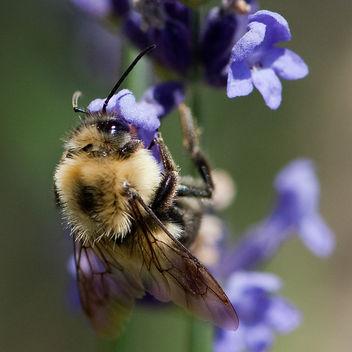 summer lavendar - бесплатный image #280205