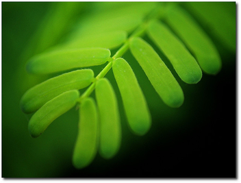 green leaves - image #280625 gratis