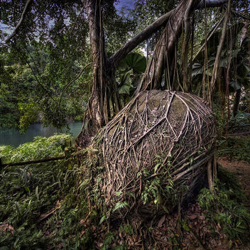 Nature Walk @ Bukit Batok Nature Reserve - Free image #280815