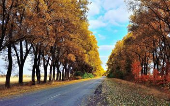 Autumn road - image #280925 gratis