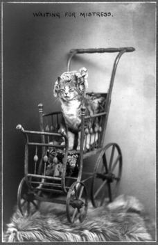 A Portrait of a Kitten Cat in a Vintage Baby Carriage Buggy, Waiting for Mistress - image gratuit #281145