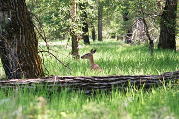 Deer in Fish Creek park - Free image #282835