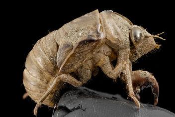 Cicada, shell, upper marlboro, md_2014-07-10-19.57.12 ZS PMax - бесплатный image #282985