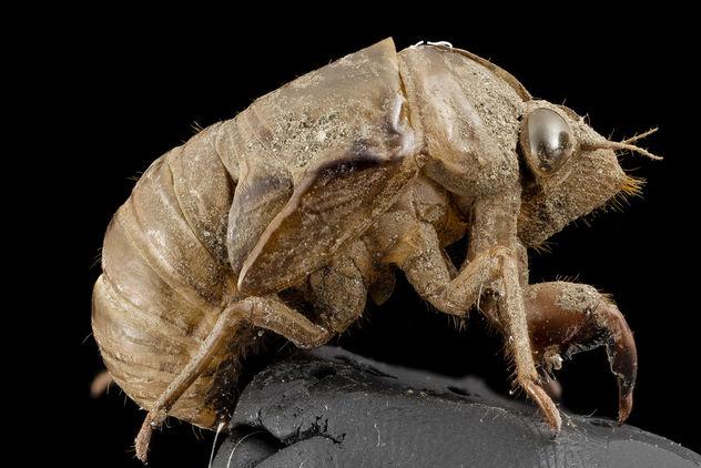Cicada, shell, upper marlboro, md_2014-07-10-19.57.12 ZS PMax - image #282985 gratis