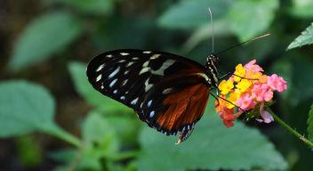 Butterfly | Schmetterling - image #283085 gratis
