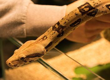 snake - Free image #283335