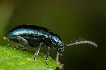 Shiny Blue Beetle - image gratuit #283385
