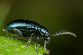 Shiny Blue Beetle - бесплатный image #283385