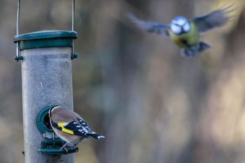 20150114__5D_1917 Birds in flight 01.jpg - Free image #283555