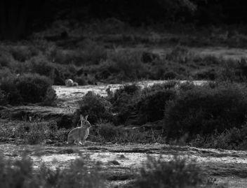 Landscape bunny - Free image #283755