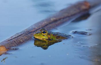 Lindas ranitas / Cute frogs - Free image #283765