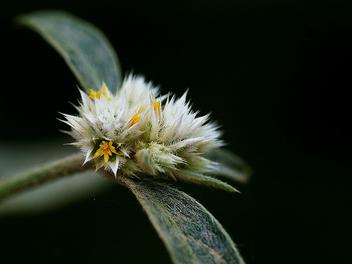 micro flowers - бесплатный image #284055