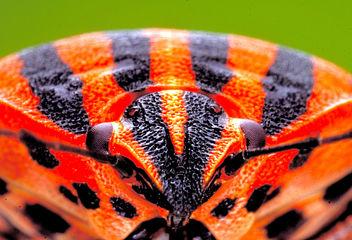 2010 07 30 Bug vom bug - image gratuit(e) #284405