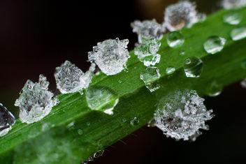 Frozen Drops - Free image #284705