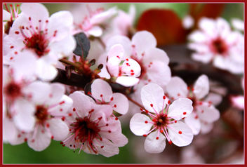 Spring Refreshed - Free image #285045