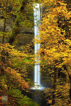 Yellow - Kostenloses image #285575
