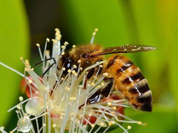 Bee - Free image #285805