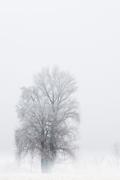 Alone in winter - Free image #285875