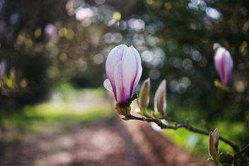 HBW - Magnolia Edition - Free image #286185