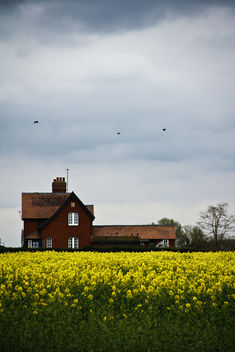 Spring in England!!! - Free image #286215